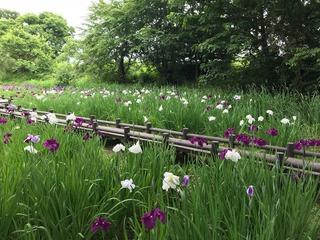 行田公園.jpg